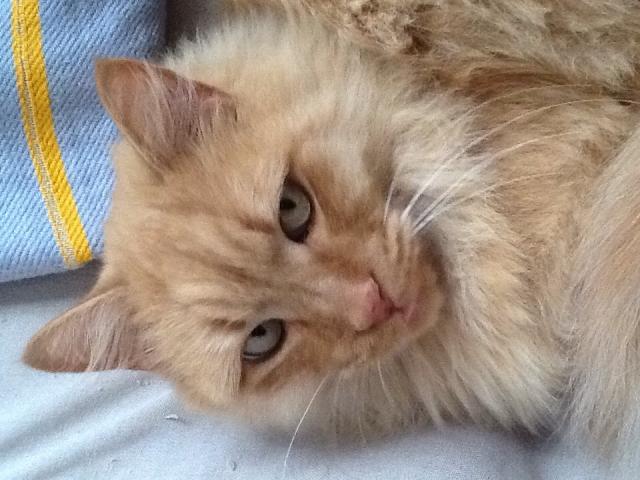 Garfield urgente!!!!